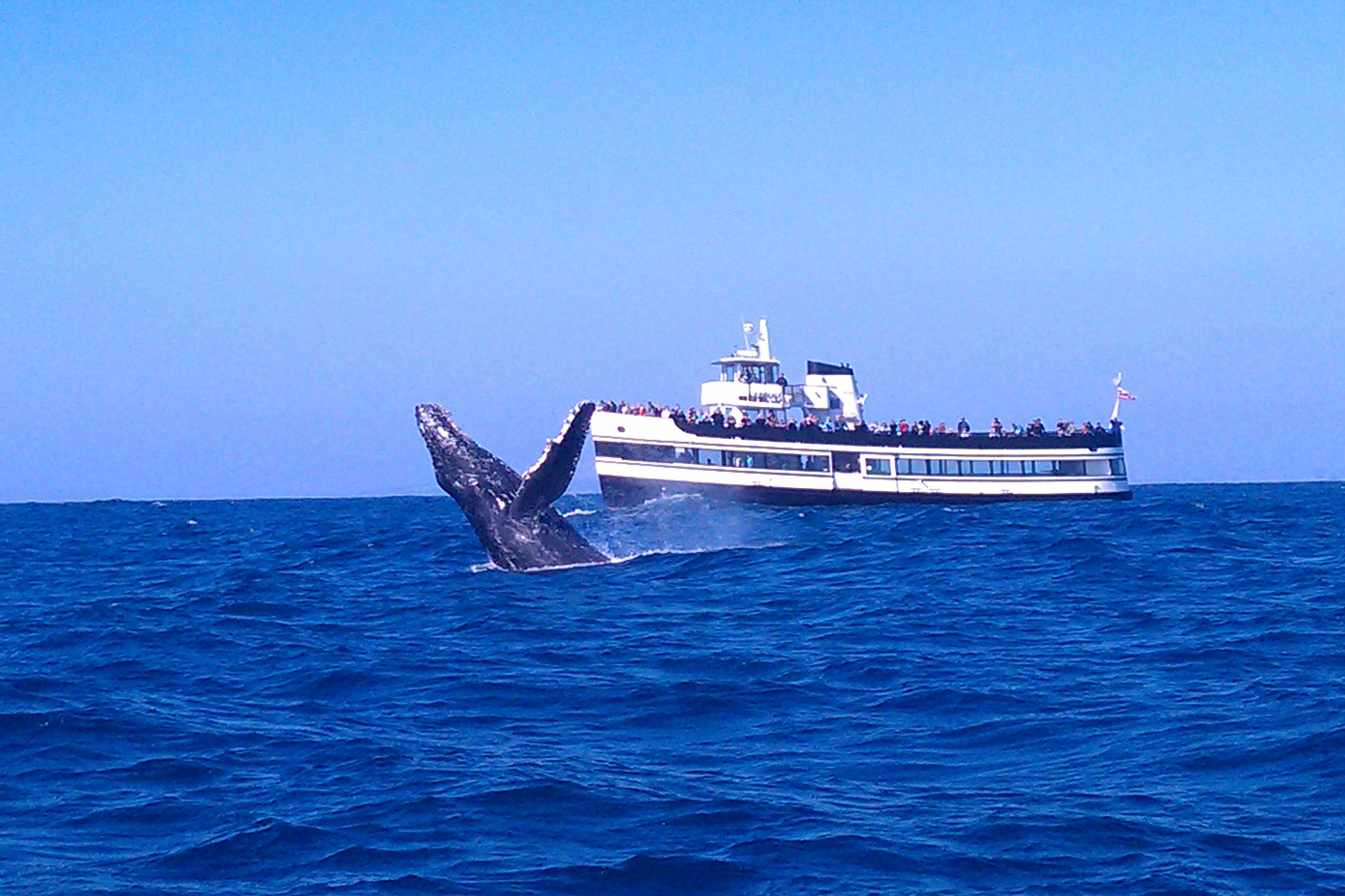 Harbor Tours Whale Watching San Diego