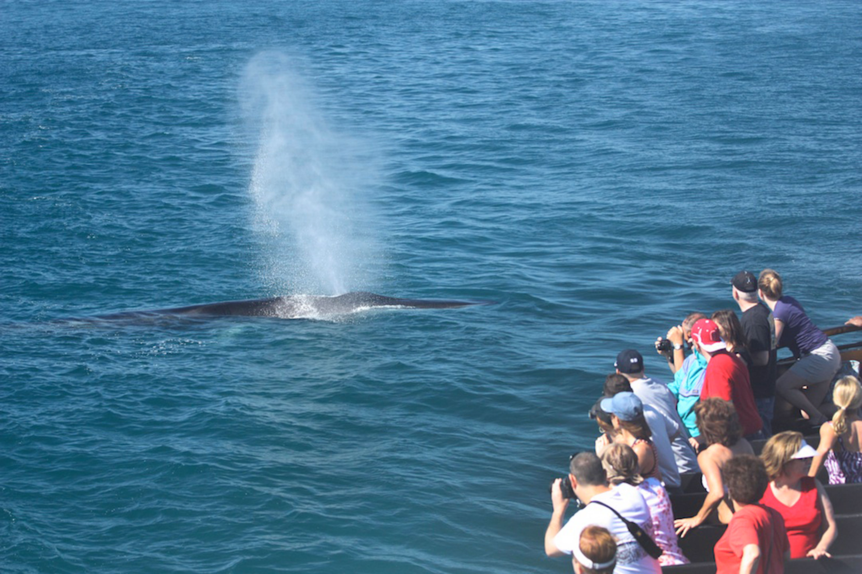 San Diego Whale Watching Tours Flagship Cruises Amp Events