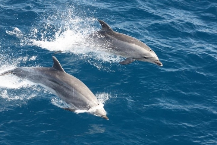 Hundreds of dolphins spotted during the season
