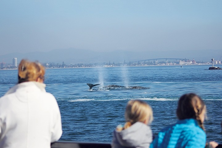View of whales and downtown San Diego