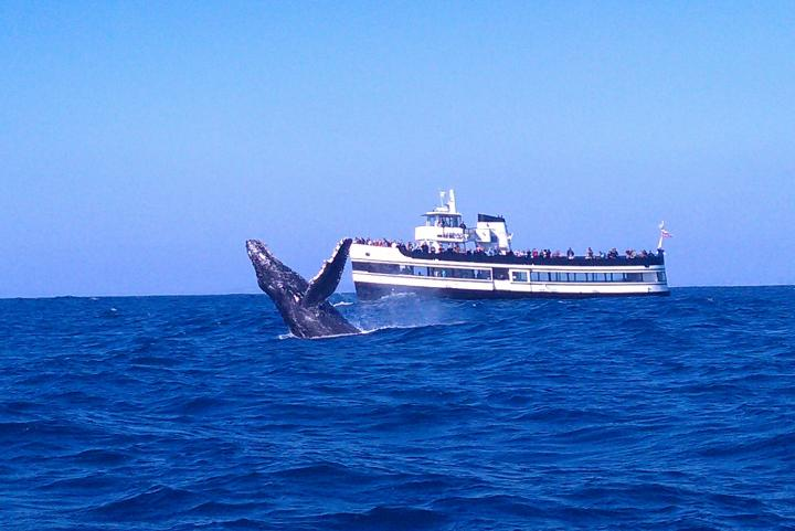 Whale bretching beside cruise