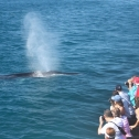 Up close view of the Blue Whales