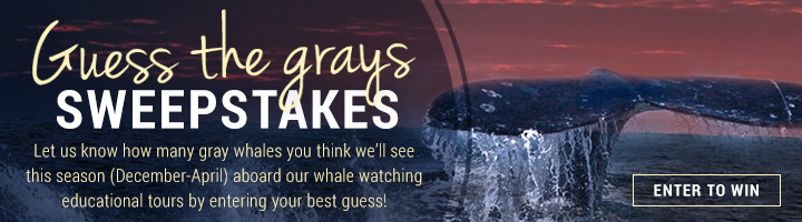 Guess the Grays Sweepstakes Tablet Tall Promo