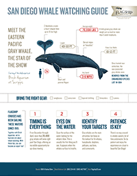Whale Watching Guide