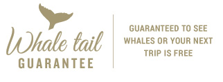 Whale Tail Guarantee